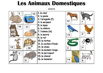 FRENCH - Picture Match - Les Animaux Domestiques (Pets)