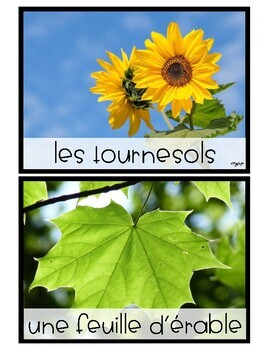 FRENCH Plants and Animals Sorting Cards