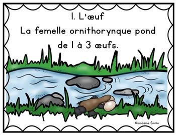 FRENCH {Platypus life cycle}/ Le cycle de vie de l'ornithorynque
