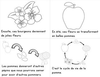 FRENCH {Apple life cycle}/ Le cycle de vie de la pomme