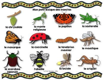 Les insectes - Mots de vocabulaire - 24 affiches (script et cursif)