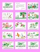 Science Project: Plant Booklet: From Seed to Plant