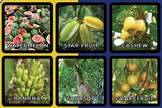 FRUITS OF BARBADOS