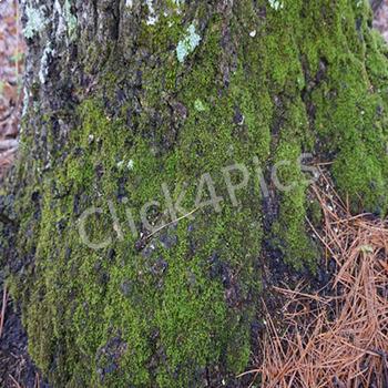 FUNGI Stock Photos TREE MOSS