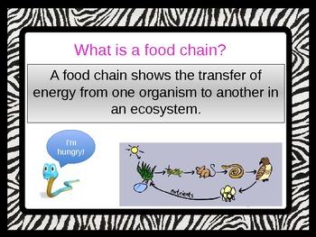 Fabulous Food Chains