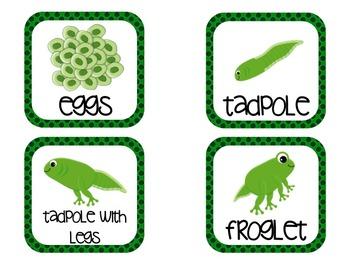 Fabulous Frog Freebie!