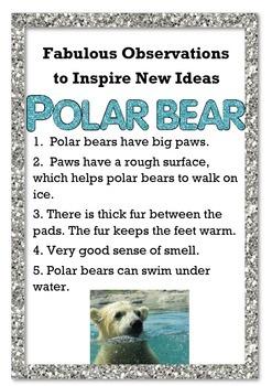 Fabulous Observations to New Ideas - Polar bear