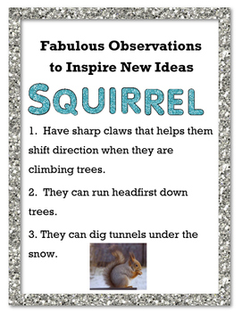 Fabulous Observations to New Ideas - Squirrel