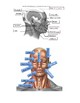 Facial Muscles Labeling with KEY