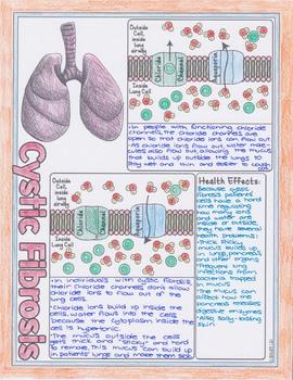Facilitated Diffusion Biology Doodle Diagrams