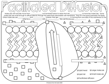 Facilitated Diffusion Coloring Worksheet 8 Differentiated Versions Included