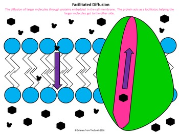 Facilitated Diffusion for Interactive Notebooks and More