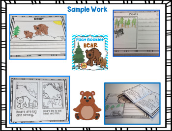 Fact Booklet - Bear