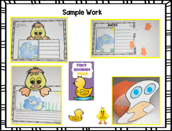 Fact Booklet - Duck
