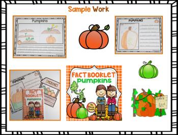 Fact Booklet - Pumpkins