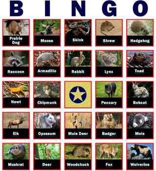 Fact-Filled Bingo - Backyard Animals
