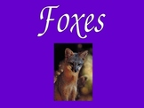 Facts about Foxes