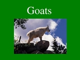 Facts about Goats