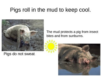 Facts about Pigs powerpoint