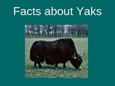 Facts about Yaks!