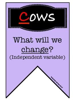 Fair Testing- Cows Moo Softly