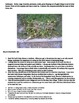 Fairy Houses by Tracy Kane : How To Make Fairy Houses With
