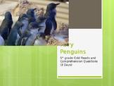 Fairy Penguins short story & comprehension