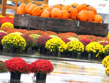 Fall - Autumn - Pumpkins - Mums - Stock Photos - Photo Pack Bundle