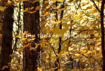 Photo Bundle Fall Leaves