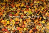 Fall Color Leaves Background Stock Photo #252