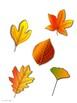 Fall File Folder: Leaf Shadow Match