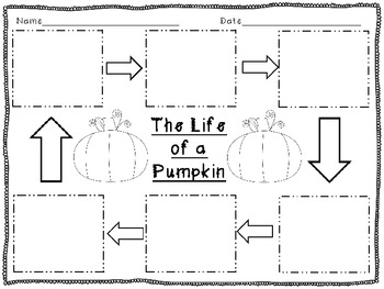 picture relating to Pumpkin Life Cycle Printable named The Everyday living Cycle Of A Pumpkin Worksheets Schooling Products