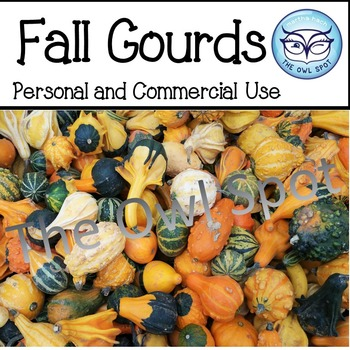 Fall Gourds Stock Photo - Personal and Commercial Use