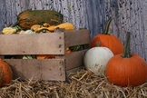 Fall Harvest and Halloween Photographs for Classroom and Commercial Use
