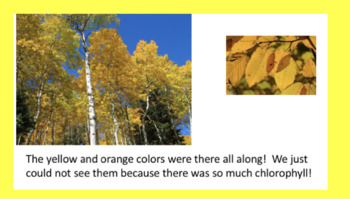 Fall Leaf Experiment With Slide Show and Interactive Notebook