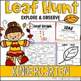 Leaf Hunt Kindergarten