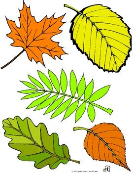 Fall Leaf Shadow Match