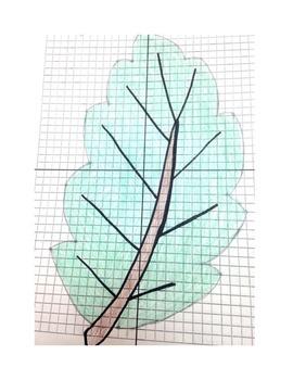 Fall Leaf Transformations