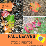 Fall Leaves ---- 3 Stock Photos