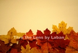 Fall Leaves Border Stock Photo #251