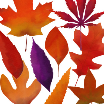 Fall Leaves Clip Art - 16 image set