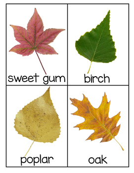 Leaf Identification Cards - 30 different cards