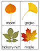 Leaf Identification Cards - 30 different cards (Great for Fall unit)