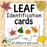 Leaf Identification Cards - 30 different cards (Great for