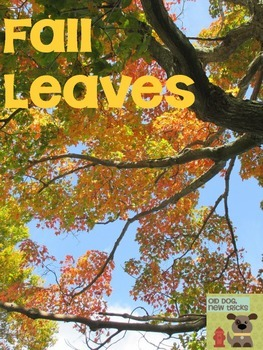 Fall Leaves Teaching Resource
