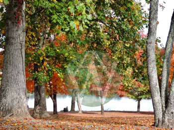 Fall: Leaves, Trees & Landscapes