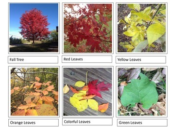 Fall Leaves Vocabulary Pictures