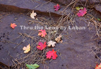 Fall Leaves on Rocks Stock Photo #245
