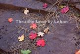Fall Leaves on Rocks Stock Photo #245