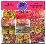 Fall Photo Set {Educlips Clipart}